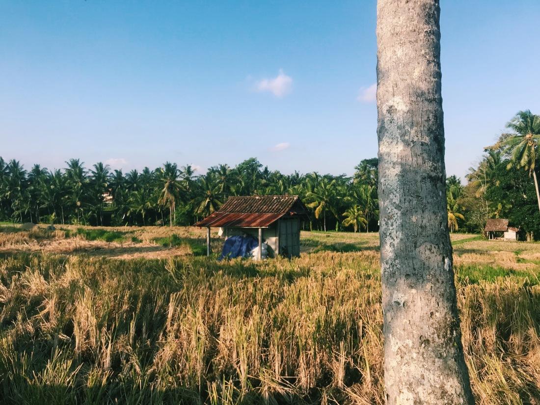 firefly villa airbnb ubud